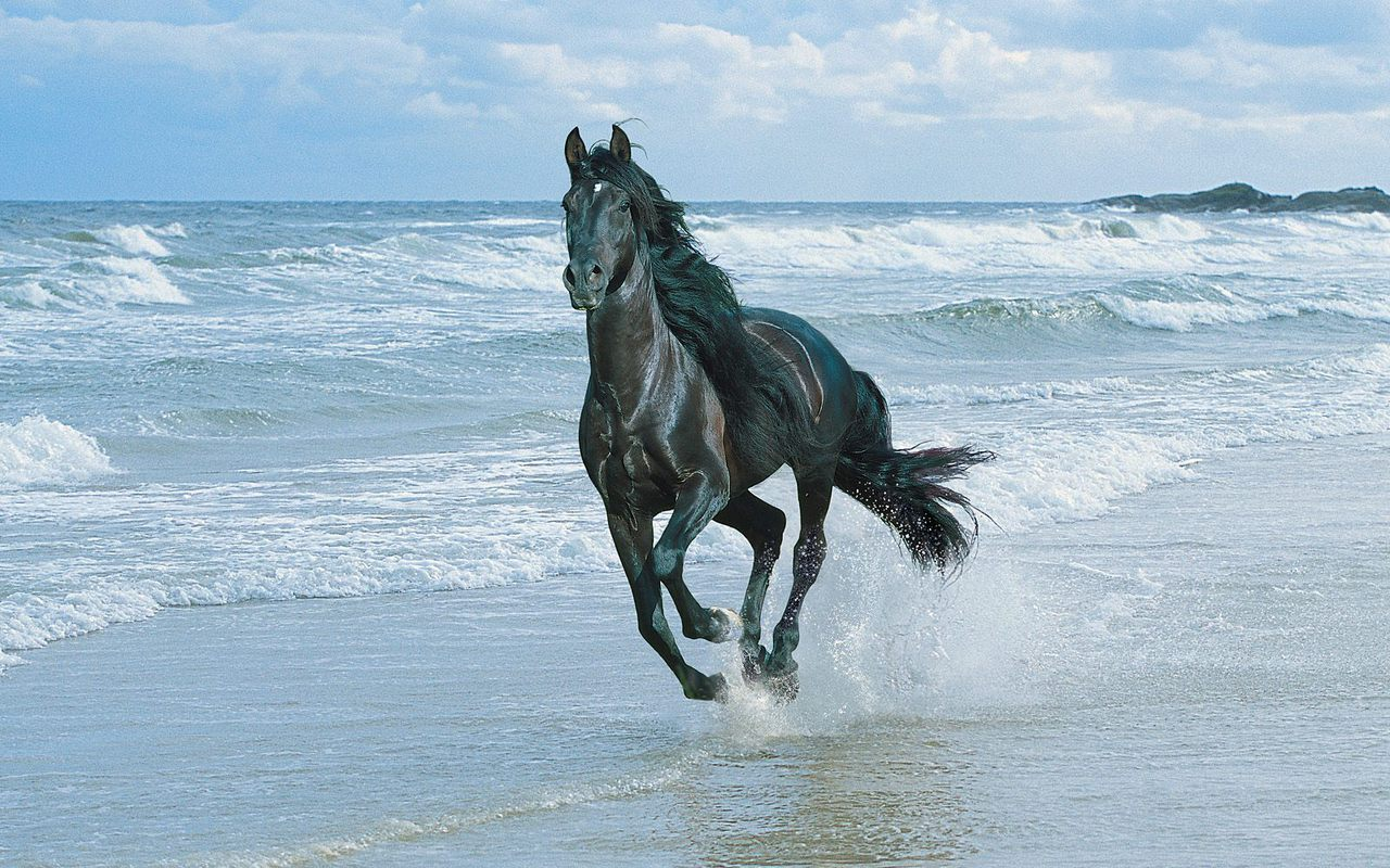 Beautiful Horse Horses Wallpaper 22410578 Fanpop
