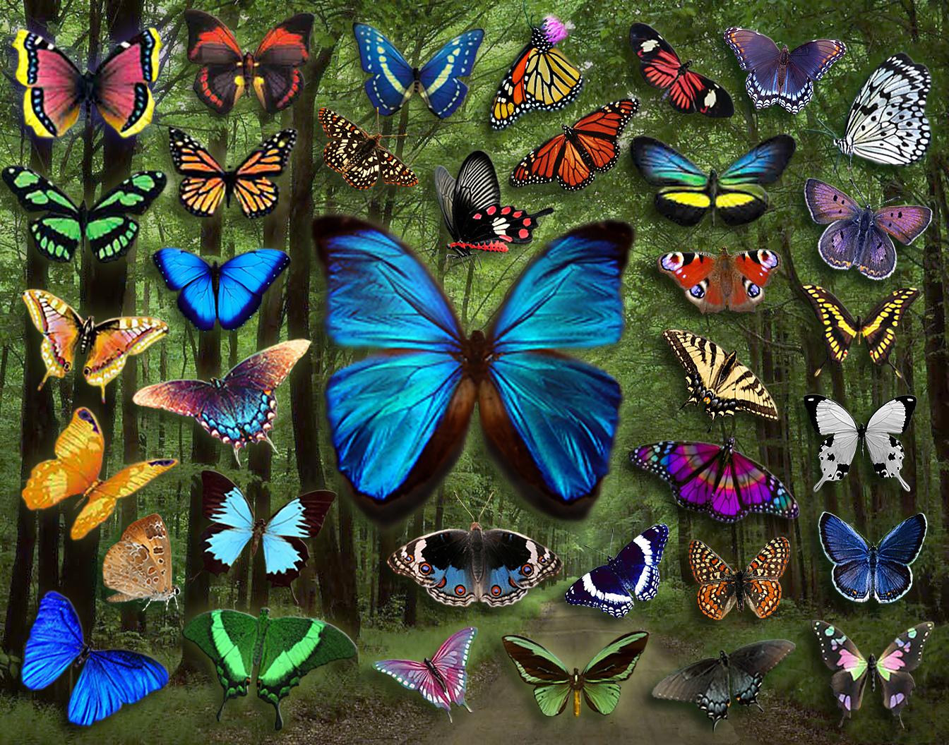 Фото: коллаж из бабочек