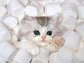 Cute Kitten - kittens photo