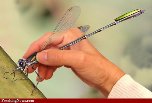 Dragonfly Pen