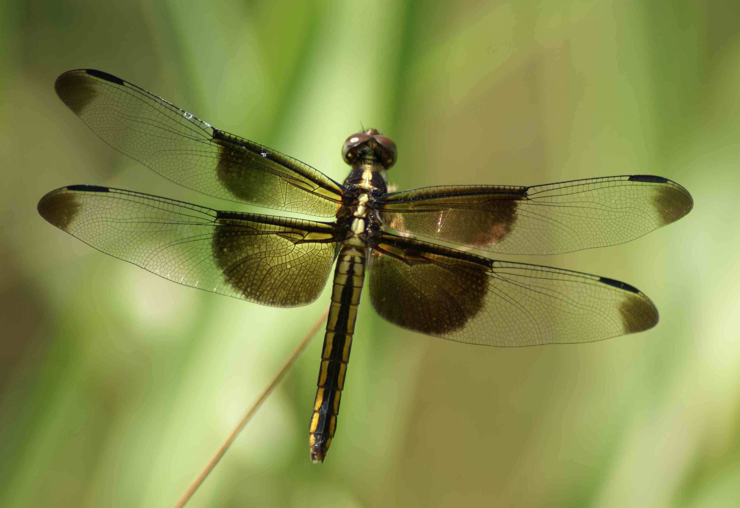 Dragonflies images Dra...