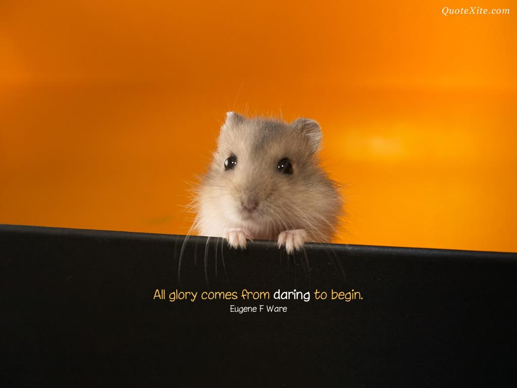 motivational wallpaper animals - photo #7