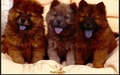 puppies - Little Sweethearts wallpaper
