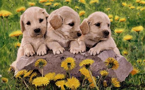 Little Sweethearts