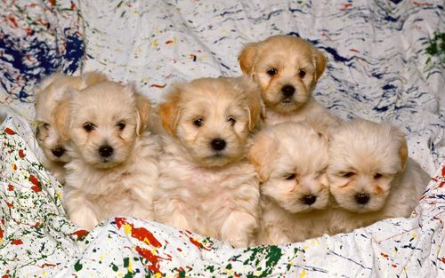 Little Sweethearts - puppies Wallpaper
