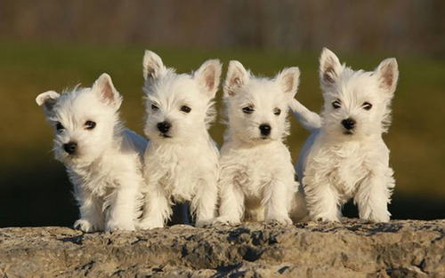 Puppies wallpaper titled Little Sweethearts
