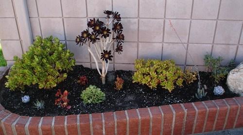 My Succulent Garden