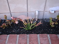 My Succulent Garden - flora-and-fauna photo