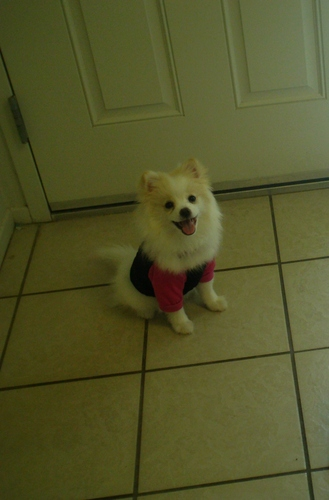 My baby Lilah, ready to go to the vet :)