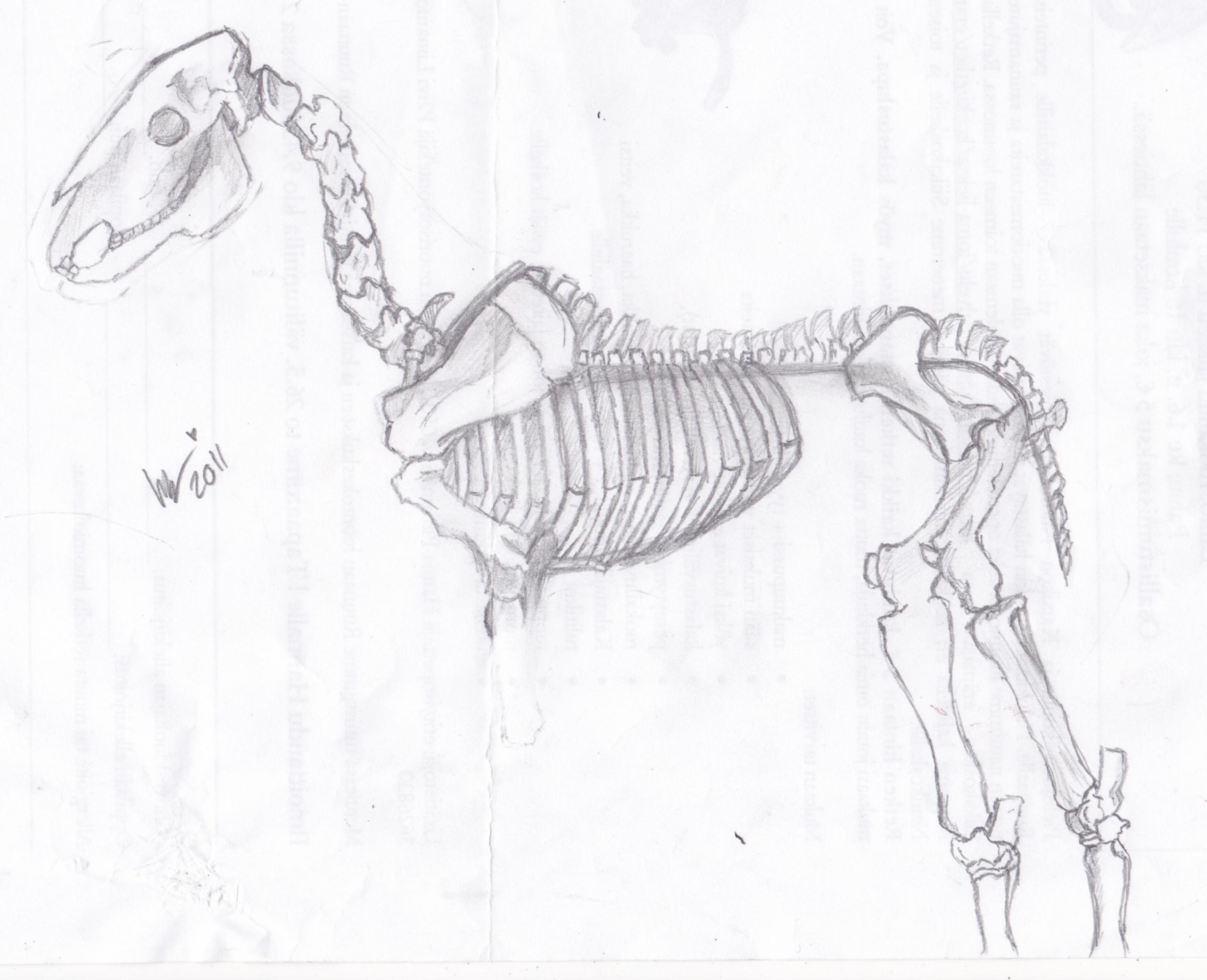 Skeleton Horse Sonic Fan Characters Fan Art 22497962 Fanpop