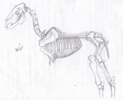 Skeleton Horse ~