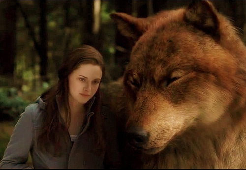 twilight jacob black wolf - photo #15