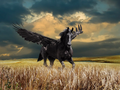 Black Horse - horses photo