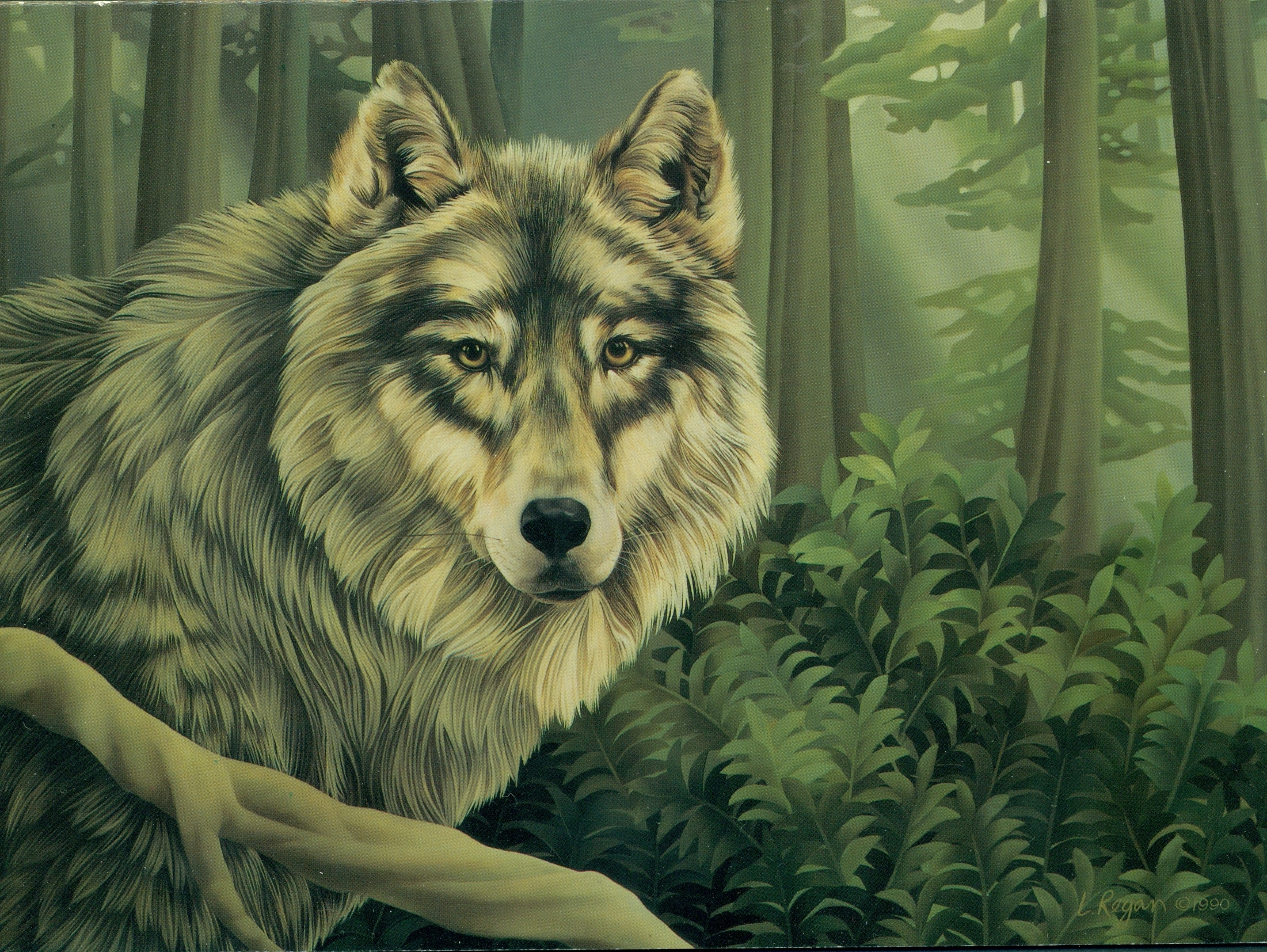 Wolves grey wolf
