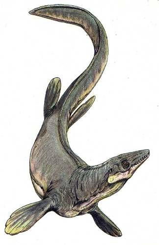 Plioplatecarpus