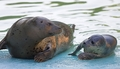 Seals - zoos photo