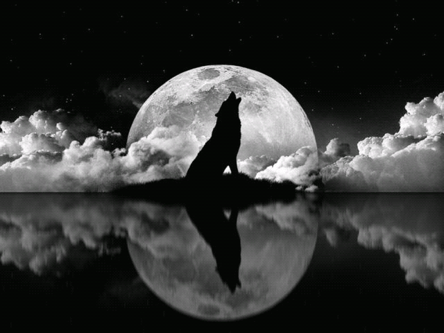 Black wolf howling at moon - photo#11