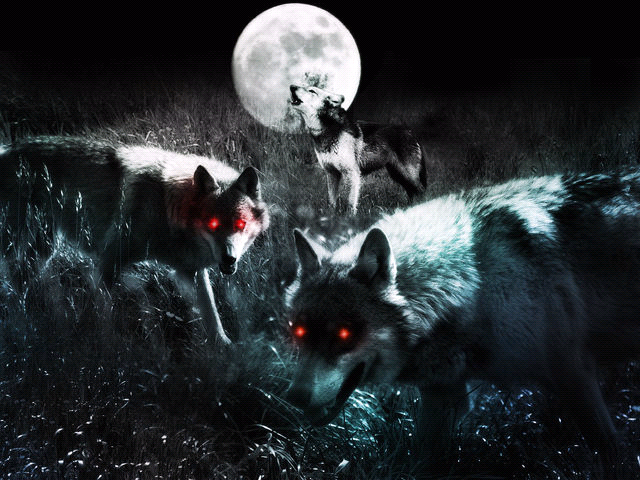 Wolves - wolves photo