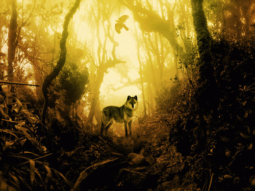 Wolves wallpaper called Wolves