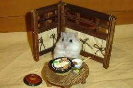 hamster fun - hamsters Photo