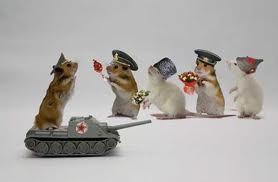 hamster fun