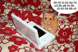 Hamsters wallpaper entitled hamsters