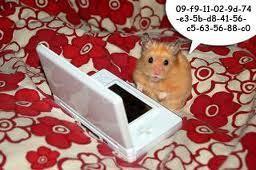 Hamsters wallpaper titled hamsters