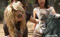 Ke$sha with a koala