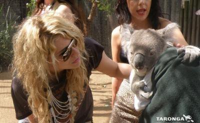 Ke$ha wallpaper entitled ke$ha with a koala