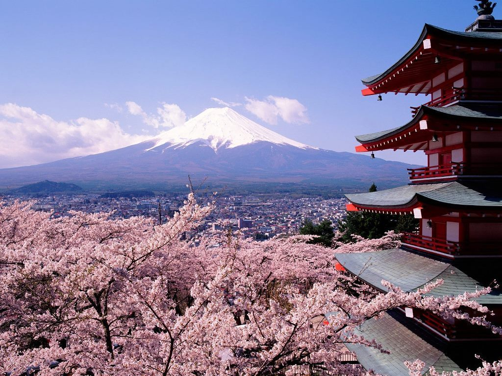 Cherry Blossoms and Fuji