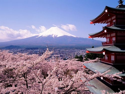 樱桃 Blossoms and Fuji