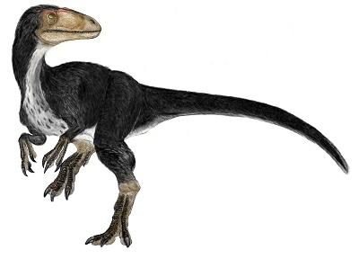 Dinosaurs wallpaper called Dilong