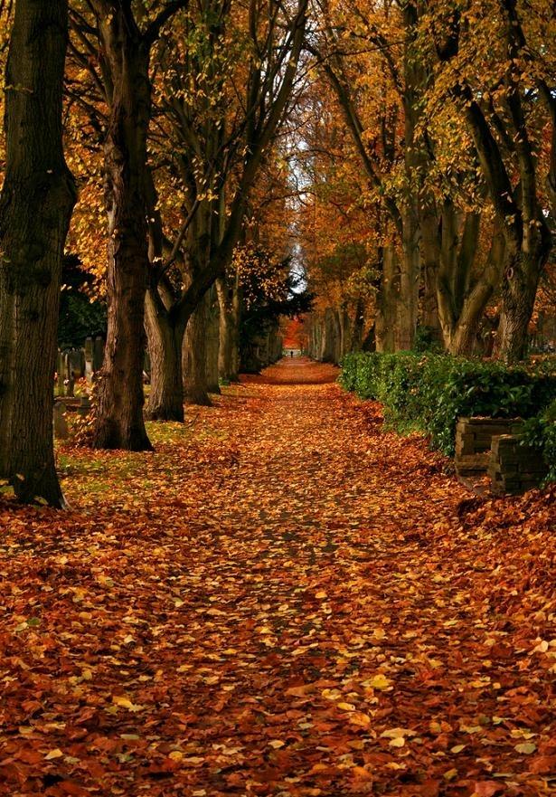 nature fall autumn background fanpop hd landscapes club stare