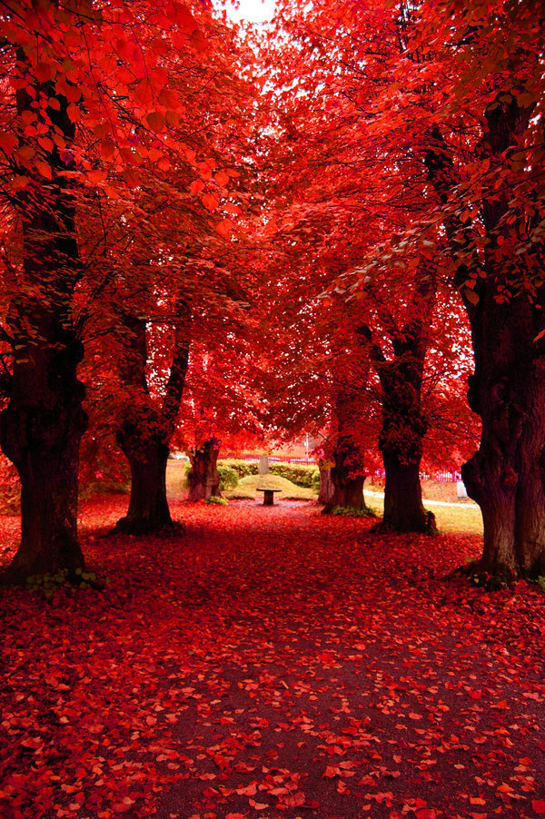 nature fall autumn trees tree fanpop forest things pretty leaves most beauty amazing leaf rojo gorgeous blossom stunning colour its