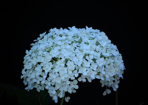 Many Flowers...