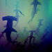 Sharks - sea-life icon