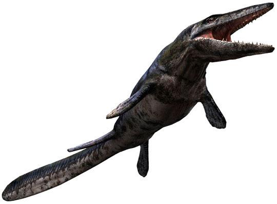 Megalodon V Tylosaurus Dinosaurs Forum