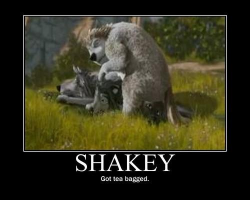 poor shakey