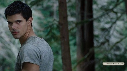Taylor Lautner wallpaper probably containing a sitka spruce called 'Breaking Dawn Part 1' Official Trailer