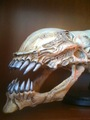 Alien Skull - the-alien-films photo