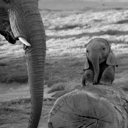 Baby elefante With Mother