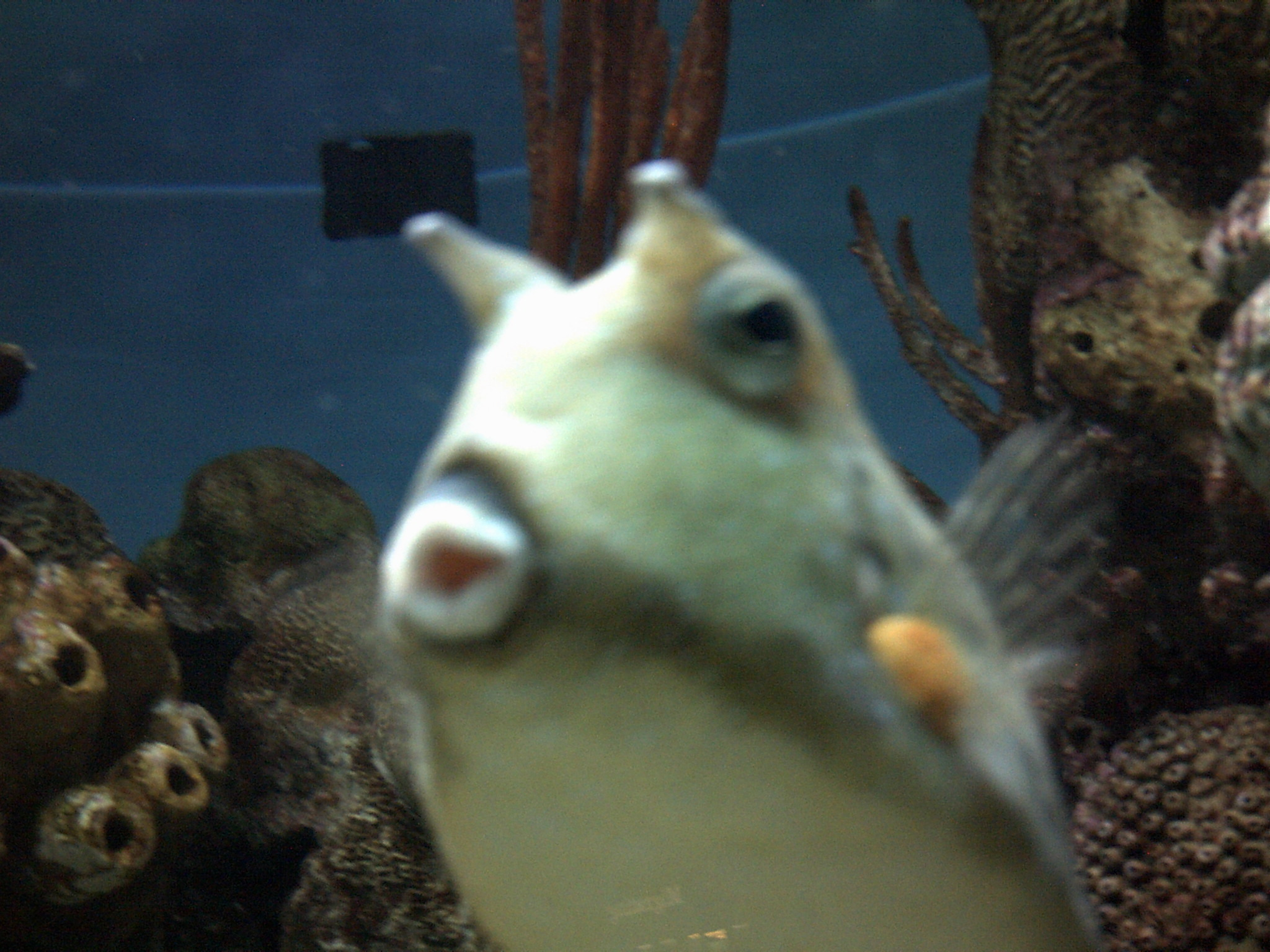 oceans images cute cow fish hd wallpaper and background photos
