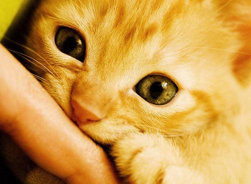 Cuute kitties