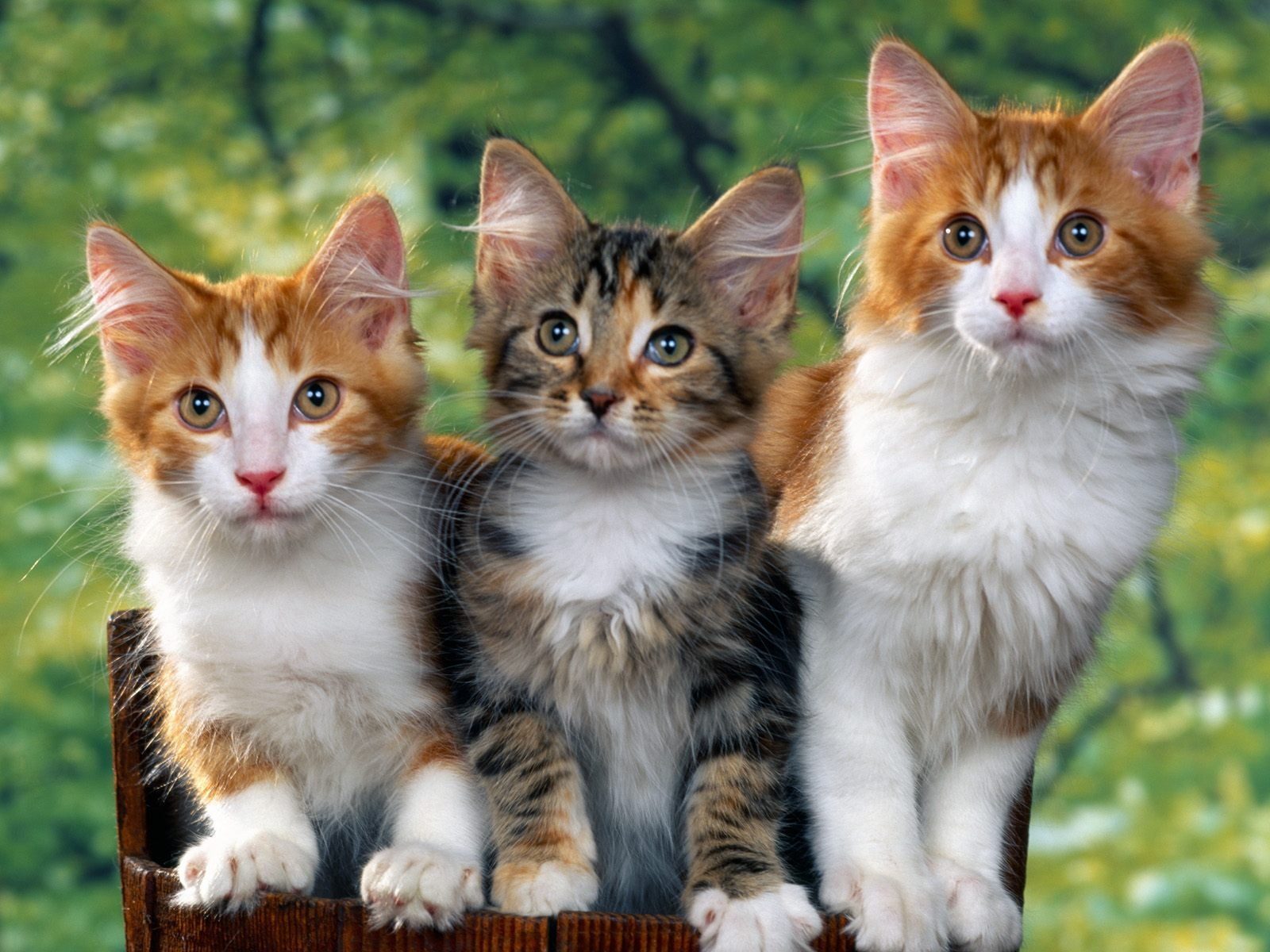 cats parrots and butterflies images Kittens HD wallpaper and