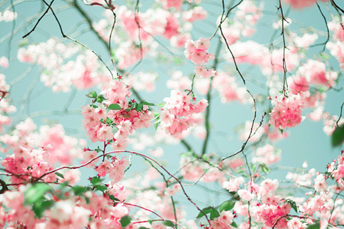Beautiful Pictures achtergrond with a japanese plum, a japanese apricot, and an european red elder called Oh,this is stunning