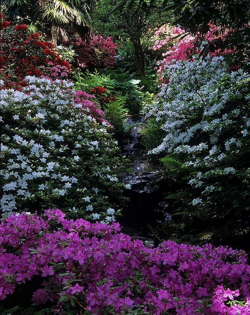 Spring - Beautiful Nature Photo (22727213) - Fanpop