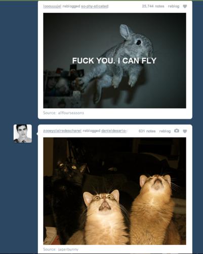 Tumblr Win