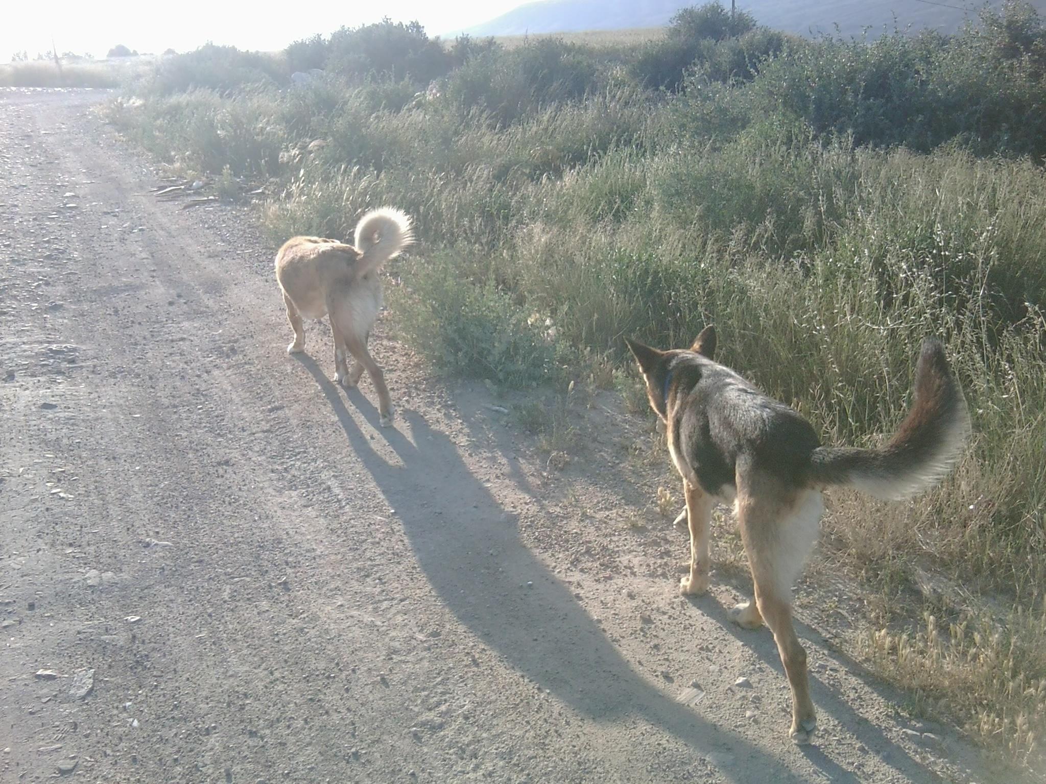 My Hunde