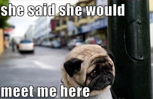 SO CUTE.... POOR perrito, cachorro ;[ <3
