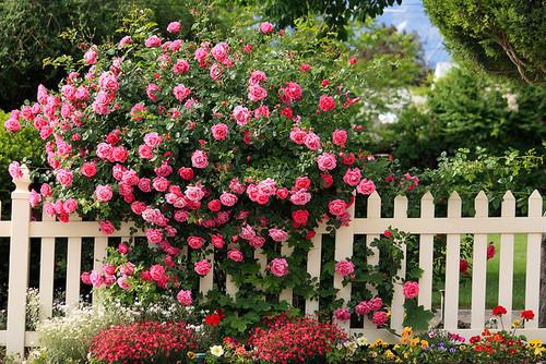 Touch of berwarna merah muda, merah muda